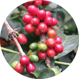 <B> 4 Generations </B> working around coffee and managing their own crops for more than 100 years.