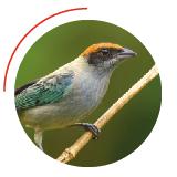 135 especies de aves