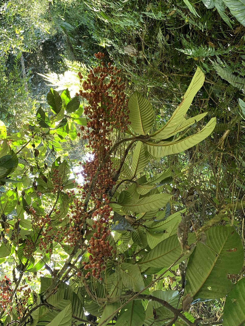 planta 1